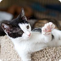 Adopt A Pet :: Fletcher - Island Park, NY