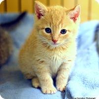 Adopt A Pet :: Myles - Island Park, NY