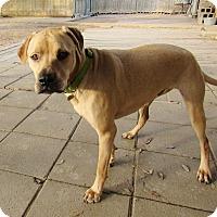 Adopt A Pet :: Ozzie - Silsbee, TX