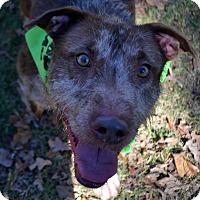 Adopt A Pet :: Fonzie - Burleson, TX