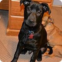 Adopt A Pet :: Zedd - Houston, TX