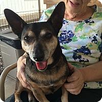 Adopt A Pet :: Flavio - Phoenix, AZ