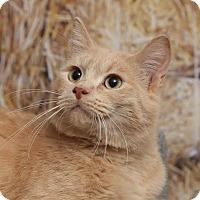 Adopt A Pet :: Rosco - Chippewa Falls, WI