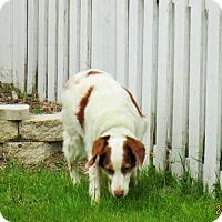 Adopt A Pet :: CODY:Adoption Pending - Palm Coast, FL