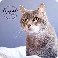 Adopt A Pet :: Cindy - Apache Junction, AZ