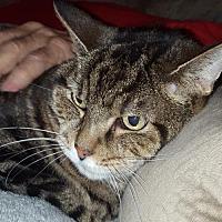 Adopt A Pet :: Zane - Columbus, OH