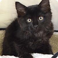 Adopt A Pet :: Dipstick - Dublin, CA