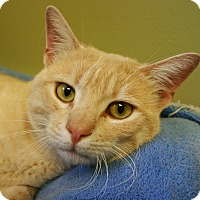 Adopt A Pet :: Mr. Pibb - Hastings, NE
