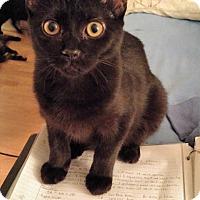 Adopt A Pet :: Payton - Tampa, FL