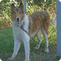 Adopt A Pet :: Collin - Manning, SC