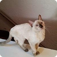 Adopt A Pet :: Nekohime - Ogden, UT