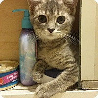 Adopt A Pet :: Dory - Mt. Pleasant, PA