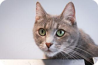 Domestic Mediumhair Cat for adoption in Loogootee, Indiana - Ella