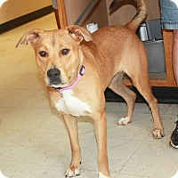Adopt A Pet :: Sephra - Cottageville, WV