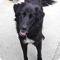 Adopt A Pet :: Romeo - Newport, KY