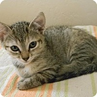 Adopt A Pet :: Lenci - san diego, CA