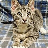 Adopt A Pet :: Jasper - Cannelton, IN