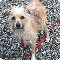 Adopt A Pet :: Chloe - Auburn, WA