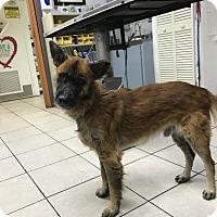 Adopt A Pet :: BARNER-17 StPete - Lithia, FL