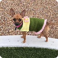 Adopt A Pet :: Abby Rose - Las Vegas, NV
