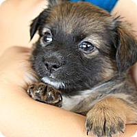 Adopt A Pet :: JD - San Diego, CA