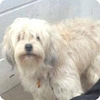 Adopt A Pet :: Wheatley - Sugar Land, TX