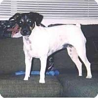 Adopt A Pet :: RASCAL - Scottsdale, AZ