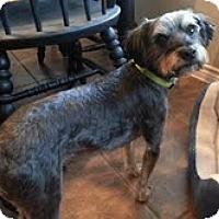 Adopt A Pet :: Benji - Grand Rapids, MI