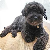 Adopt A Pet :: Daisy - Warwick, NY