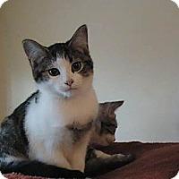 Adopt A Pet :: *FREE KITTENS - Winder, GA