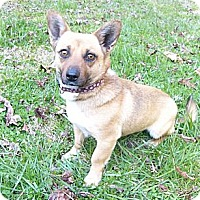 Adopt A Pet :: Mandy - Mocksville, NC