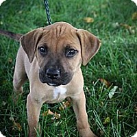 Adopt A Pet :: Parsnip - Broomfield, CO