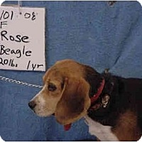 Adopt A Pet :: Rose/Pending - Zanesville, OH