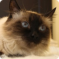 Adopt A Pet :: Lady - Laguna Woods, CA