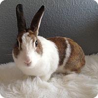 Adopt A Pet :: Iris - Watauga, TX