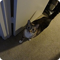 Adopt A Pet :: Kumo - Cincinnati, OH