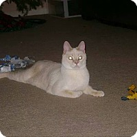 Adopt A Pet :: Milo - CH Kitty - Monroe, NC