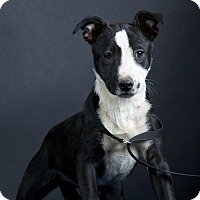 Adopt A Pet :: Amy - Nuevo, CA