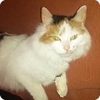 Adopt A Pet :: Laura - Byron Center, MI