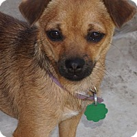 Adopt A Pet :: Smidgen - La Habra Heights, CA