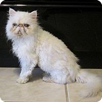 Adopt A Pet :: Tessa - Gilbert, AZ