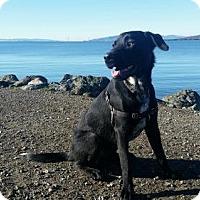 Adopt A Pet :: Sparky  *Courtesy Post* - Santa Rosa, CA