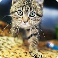 Adopt A Pet :: Meatloaf - Appleton, WI