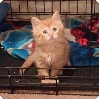 Adopt A Pet :: Waylon Jennings - Monterey, VA