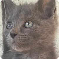 Adopt A Pet :: Yurie  $20 - Lincolnton, NC