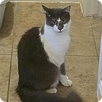 Adopt A Pet :: Vinny - Houston, TX