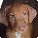 Adopt A Pet :: Ruby