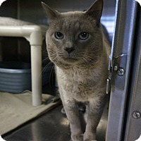 Adopt A Pet :: Rhaegar - Wyandotte, MI