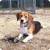 Adopt A Pet :: Roscoe - Smithtown, NY