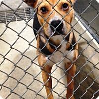 Adopt A Pet :: Luke - Vancouver, WA